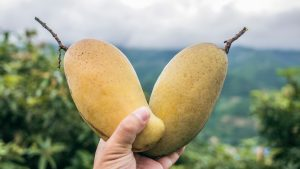 convencion del mango